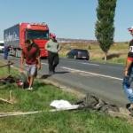 accident: caruta spulberata pe drumul European